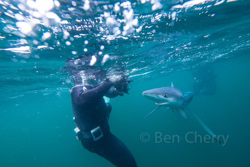 Blue Shark trip-2