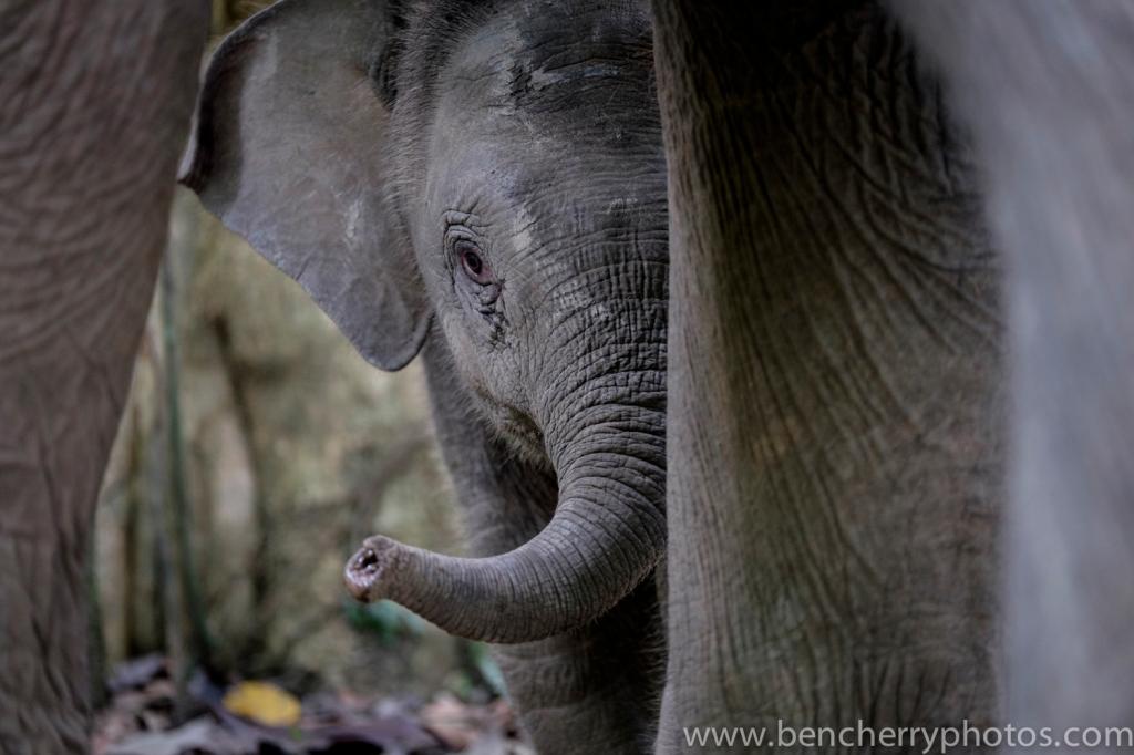 Elephant (3 of 36)