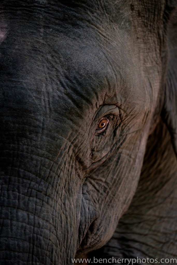 Elephant (6 of 36)