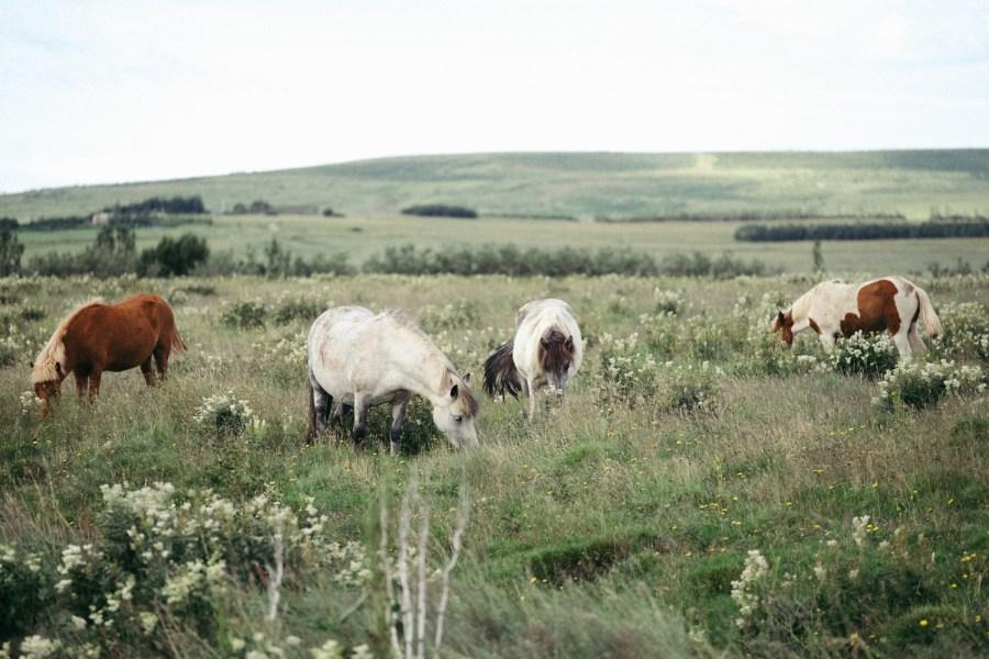 Iceland Fuji blog Danny Fernandez Photography (3 of 35)