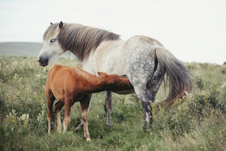 Iceland Fuji blog Danny Fernandez Photography (4 of 35)