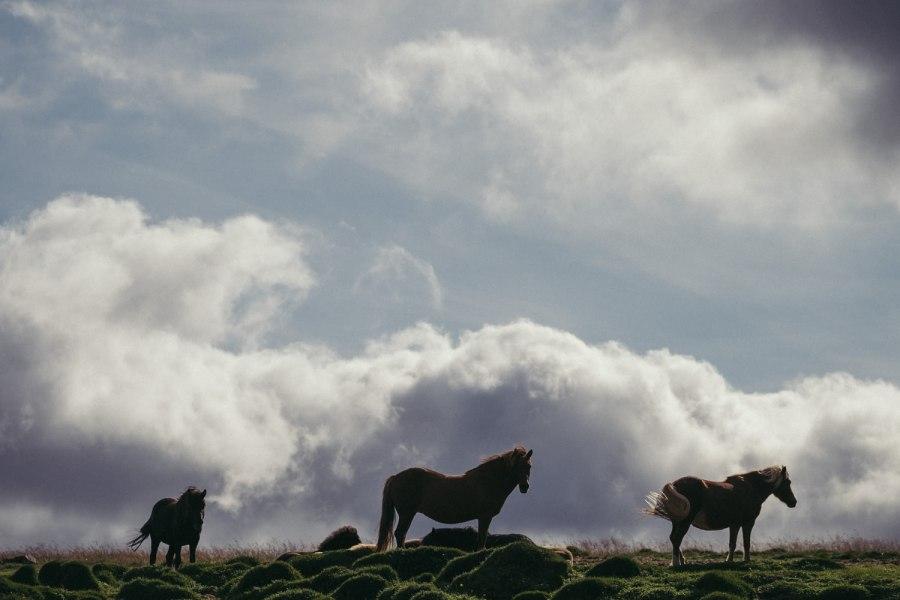 Iceland Fuji blog Danny Fernandez Photography (5 of 35)