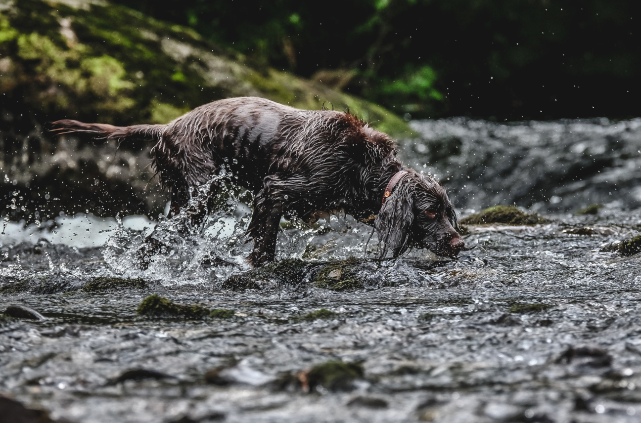 BRIA IN THE RIVER AT PLAY