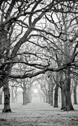 HW trees2