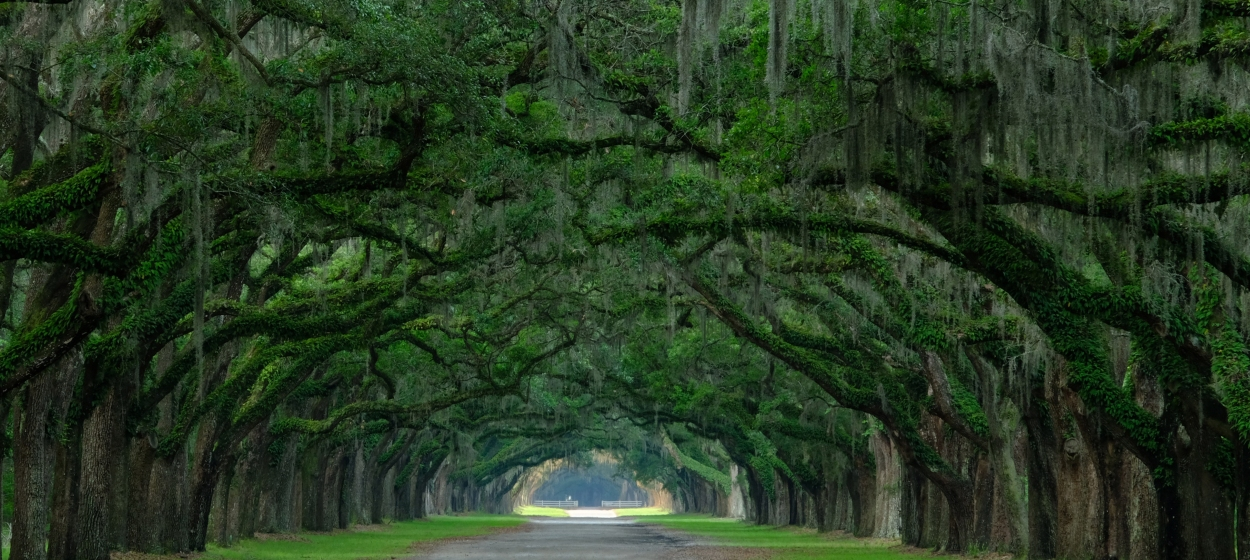 Wormsloe State Park 2