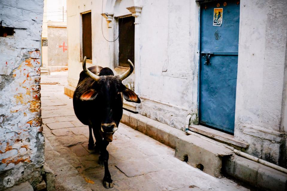 Varanasi blog (37 of 56)