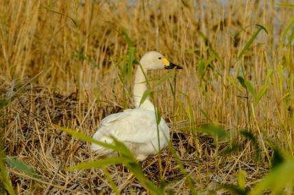ben-cherry-flight-of-the-swans-baltics-17