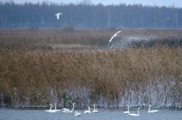 ben-cherry-flight-of-the-swans-baltics-22