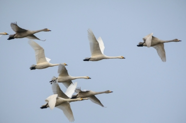 ben-cherry-flight-of-the-swans-germany-13