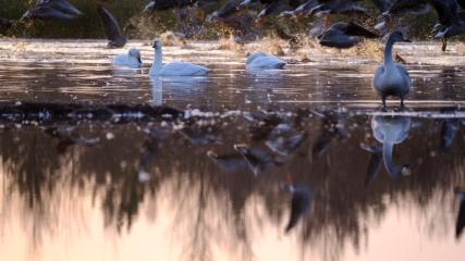 ben-cherry-flight-of-the-swans-germany-18