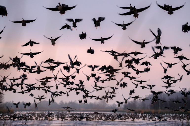 ben-cherry-flight-of-the-swans-germany-3