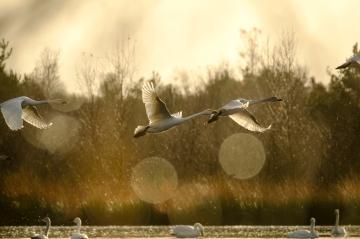 ben-cherry-flight-of-the-swans-germany-31