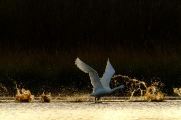 ben-cherry-flight-of-the-swans-germany-32