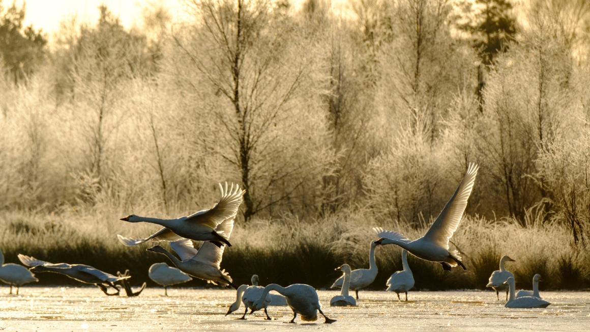 ben-cherry-flight-of-the-swans-germany-39