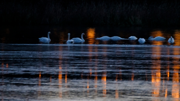 ben-cherry-flight-of-the-swans-poland-15