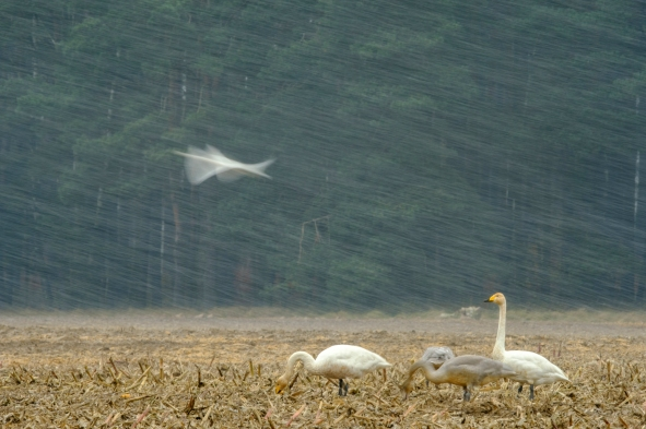 ben-cherry-flight-of-the-swans-poland-17